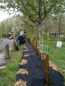Tree sapling planting