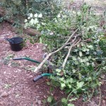 Woodland work party (15)