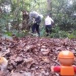 Woodland work party (17)