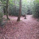 Woodland work party (7)