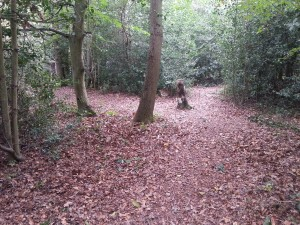Path through the middle of the woods.  Cleared by volunteers September 2014